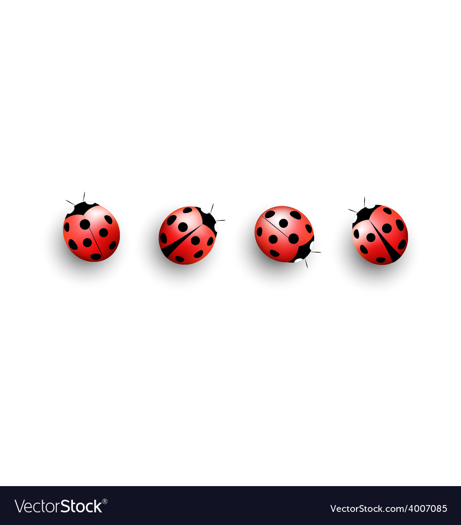 Four lady bugs with shadows on white vector