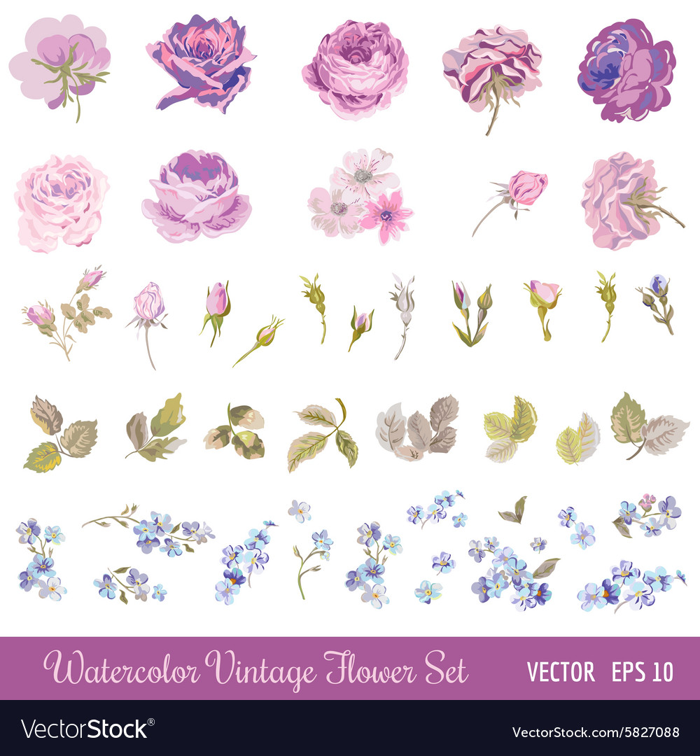 Vintage flower set  watercolor style vector