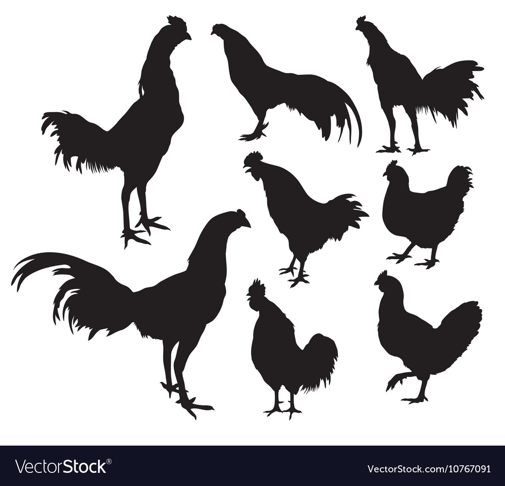 Roosters crowed silhouettes activities vector