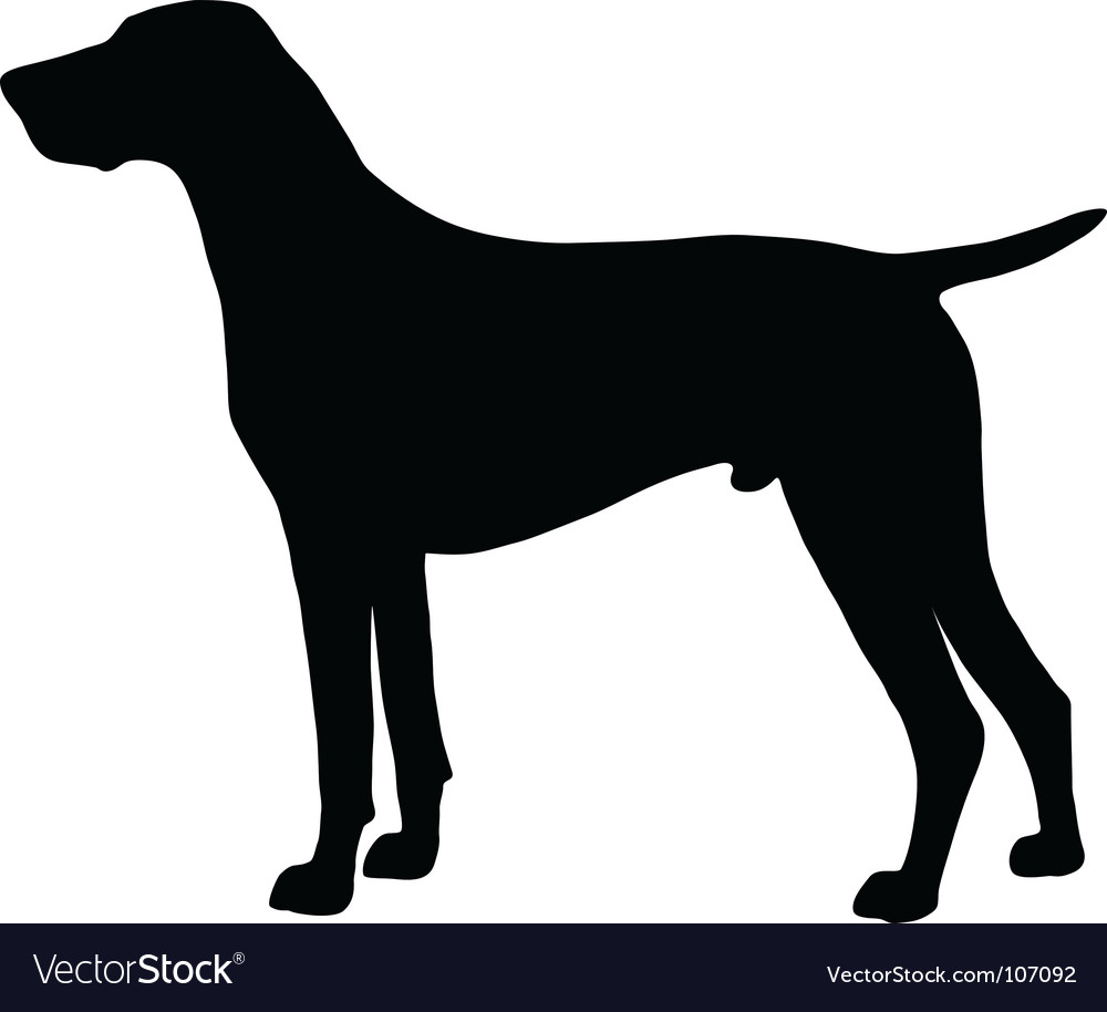 German shorthaired pointer vector