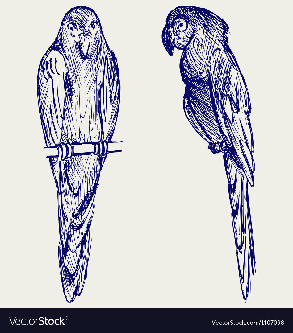 Couple of parrot vector