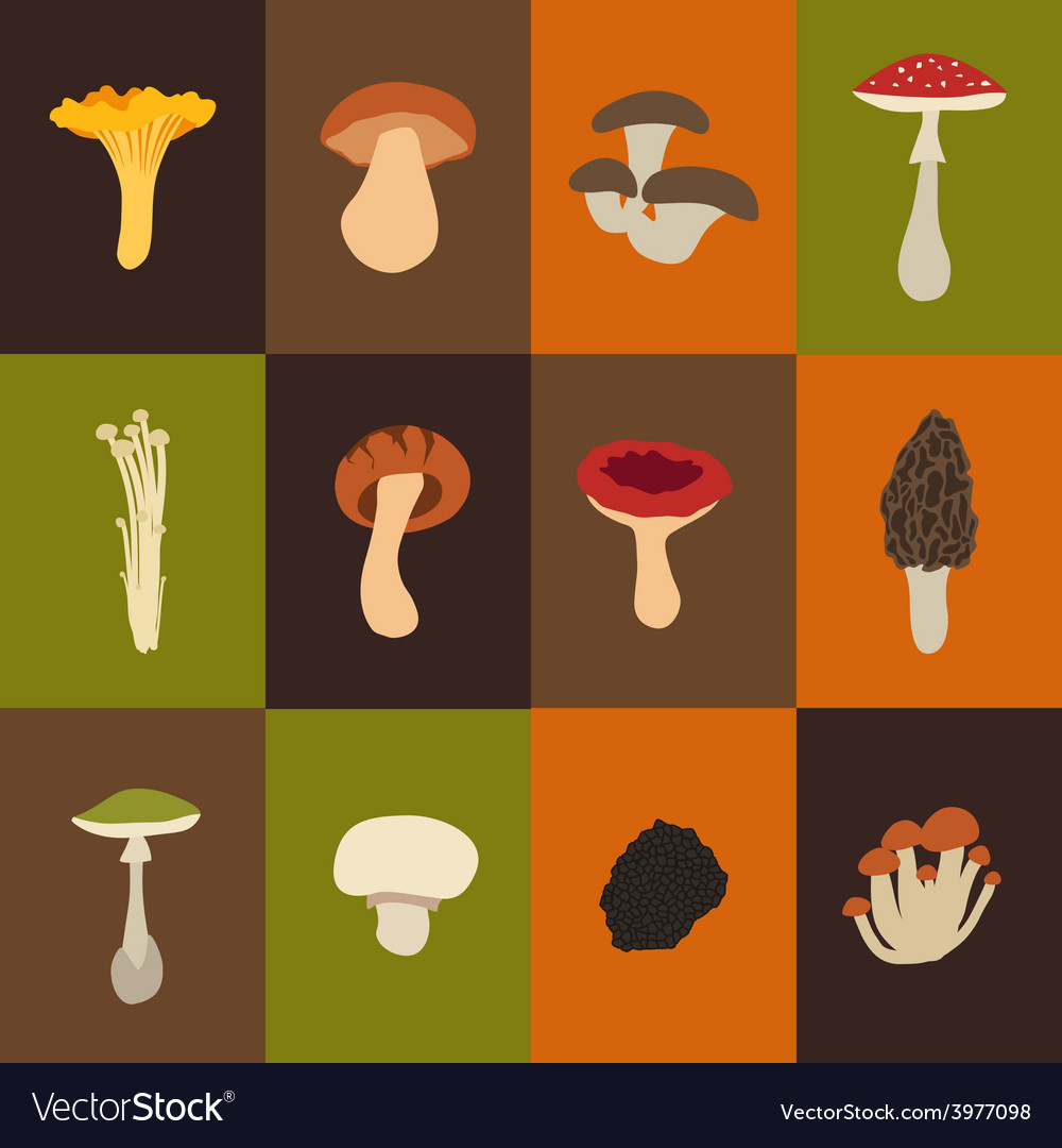 Mushroom set with flat design vector