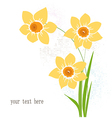 Greeting card with narcissus vector image vector image
