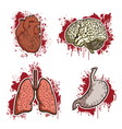 cartoon human organs vector image