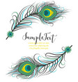 colorful peacock feathers vector image