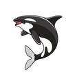 Grampus or orca jumping killer whale vector image