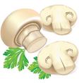 Field mushrooms and parsley vector image