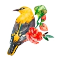 Oriole isolated on white background With exotic vector image