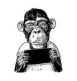 Monkeys holding table vintage black engraving vector image