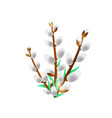 willow bunch isolated on a white background vector image