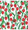 tulip white line vector image