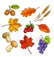 Berries with autumn leaves and mushroom vector image