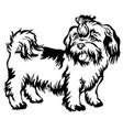 Decorative standing portrait of dog shih-tzu vector image