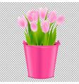 pink tulip in pot vector image vector image