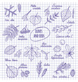 leaves and seeds of trees vector image