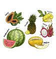 set of isolated sketch of tropical fruits vector image