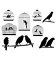 Bird in cage vector image