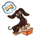Dreaming dachshund vector image