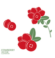 Cowberry vector image