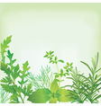 Frame of fresh herbs vector image