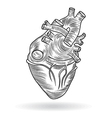 button or icon of a human heart vector image vector image