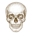 engraving skull vector image