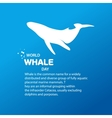 Isolated whale  Ocean mammal vector image