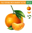Mandarin on white background vector image
