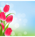 postcard with tulips vector image