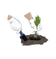 sketch planting a plant plants in the ground vector image