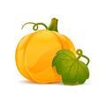 Pumpkin with leaf vector image