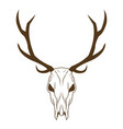 deer skull in tribal style animal skull with vector image
