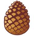 pine cone vector image vector image