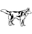 decorative standing portrait of dog siberian vector image