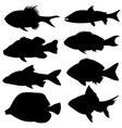 set of different small fish silhouettes vector image vector image