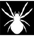 white spider vector image
