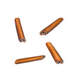 watercolor cinnamon sticks set vector image