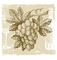 hand drawn grape vector image