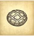rustic bread vector image