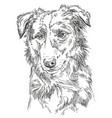 border collie vector image