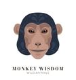 Monkey wisdom vector image