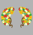 human kidneys human organs with flowers medical vector image