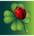 Ladybug on clover vector image