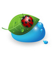ladybird on a green leaf and a drop of water vector image vector image