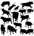bull silhouettes vector image