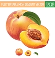 Peach on white background vector image