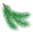 fir branch vector image