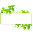 leaves and floral frame vector image vector image