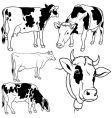 cow set vector image