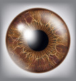 human eye iris 3d realistic eyeball vector image